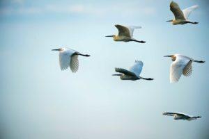 the conscious nest movement