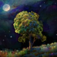 the conscious nest night tree